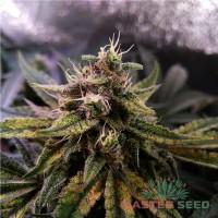 Master-Seed Auto Colorado Cookies фем.