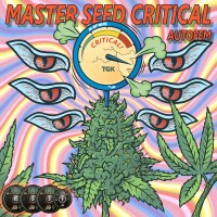 Master-Seed Auto Critical фем.